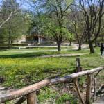 Дървен мост в Парка