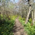 Пътека край люляка